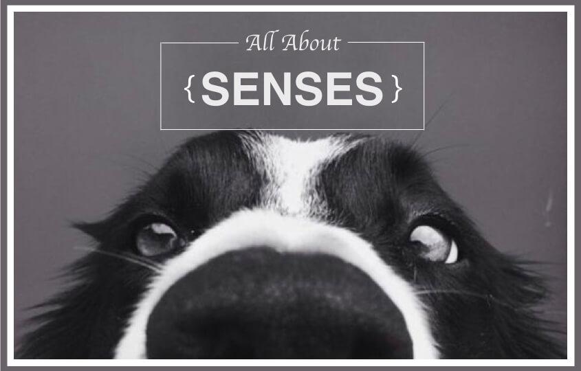 Can A Dog Get High Through The Ear