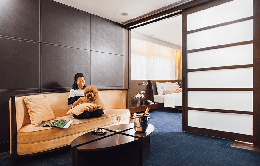 Pet Friendly Hotels And Serviced Apartments In Hong Kong