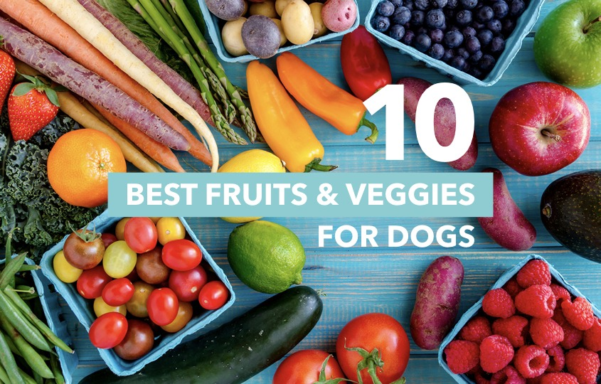 Fruits And Veggies Yes For Dogs Hellodog