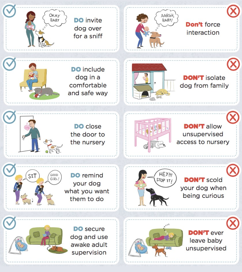 living with dogs and babies