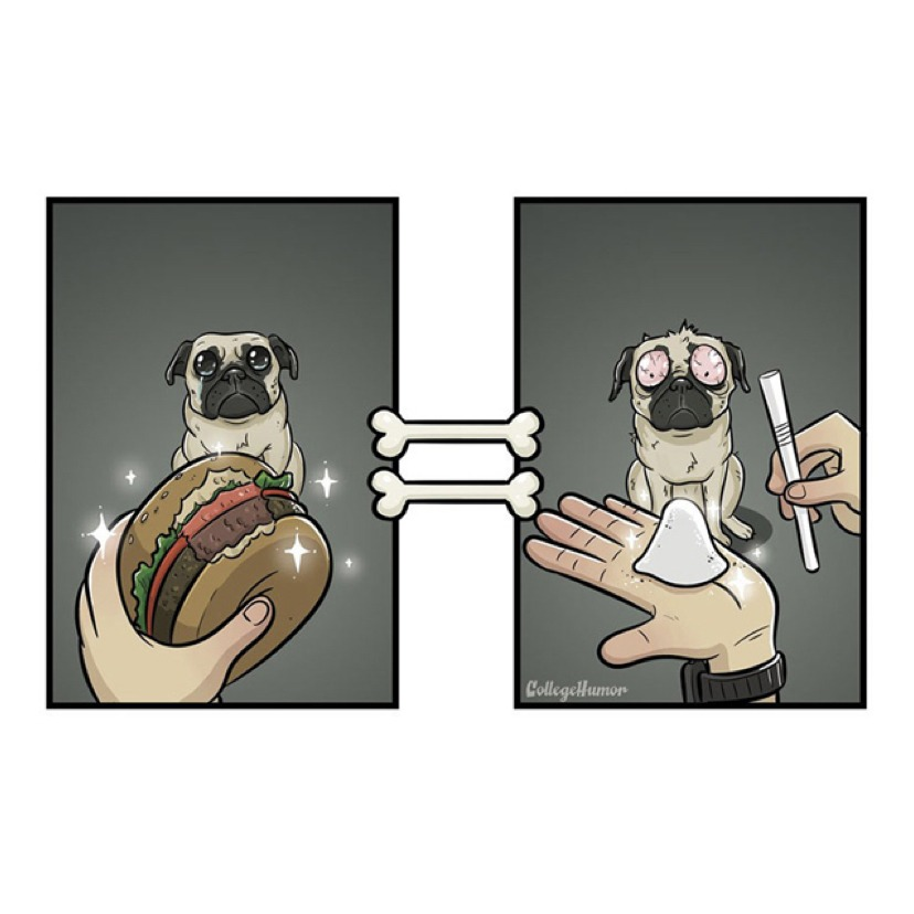 Amusing illustration: how dogs see their daily lives